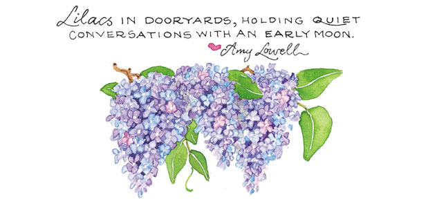 Lilacs in dooryards, holding quiet conversations with an early moon. Amy Lowell