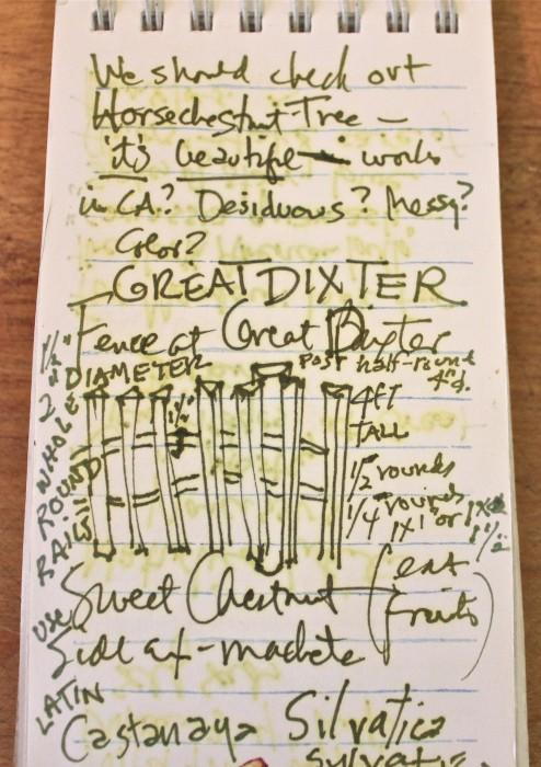 My Garden Diary | Susan Branch Blog