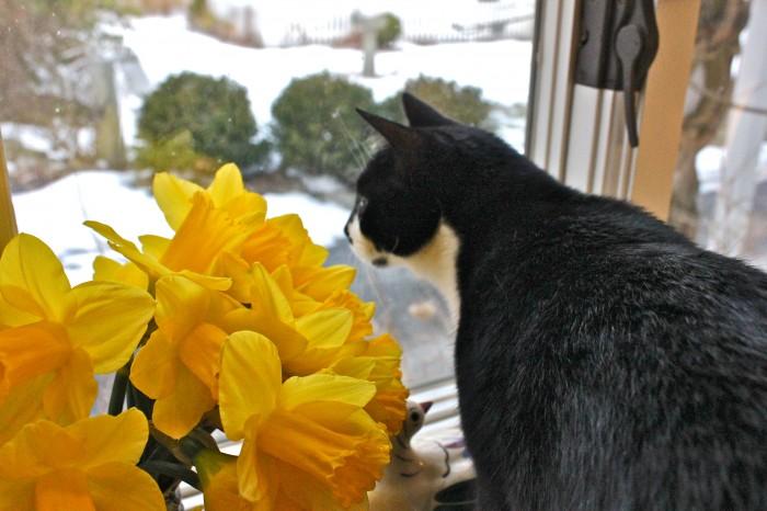 Jack and daffodils