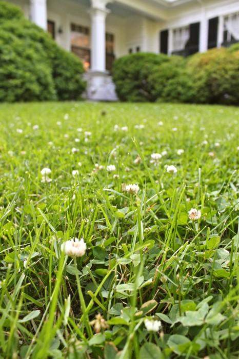 clover garden