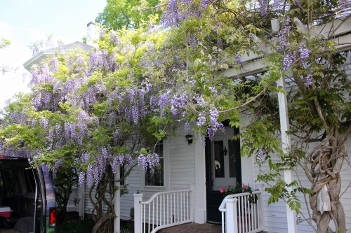 wisteria on the porch