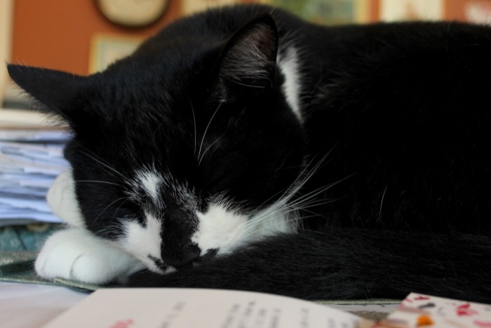 Jackie naps