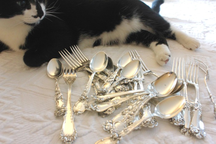 polishing the silver with cat
