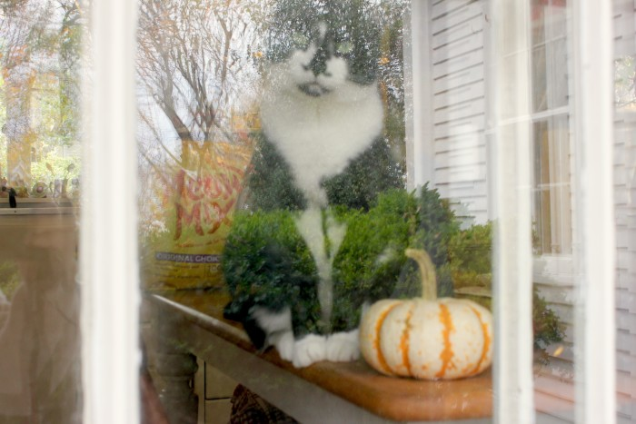 Kitty in the window